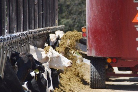 Dairy Risk-Management Education: Managing Income Over Feed Costs