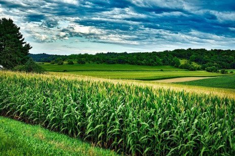 A Few Concepts on Marketing Commodity Grains
