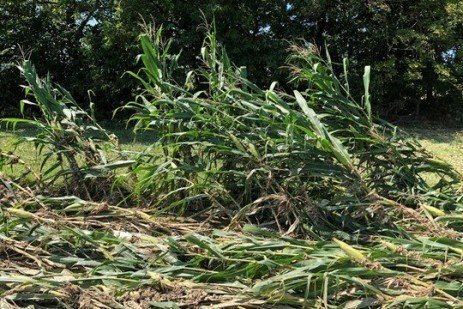 Ensuring Quality Silage After Excessive Rains and Flooding
