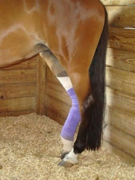 Being Prepared for the Worst: Develop a Health Care Plan for your Horse