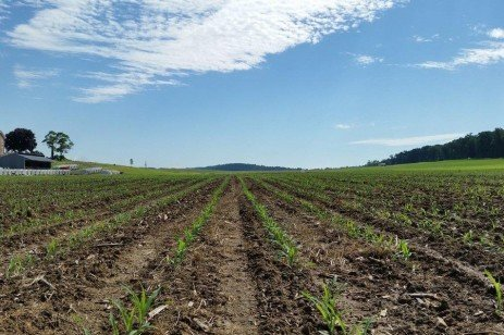 2018 Results: PA Commercial Grain and Silage Hybrid Corn Tests Report