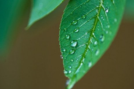 How Too Much Rain Affects Your Garden