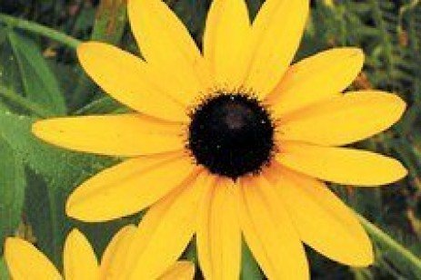 Heat and Drought Tolerant Plants