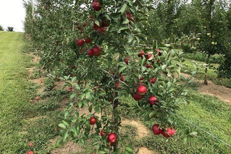 2019 Apple Maturity Assessments: Week Six