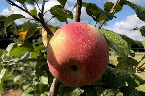 2019 Apple Maturity Assessments: Week Nine