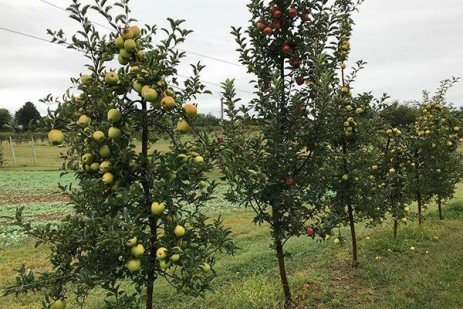 2019 Apple Maturity Assessments: Week Ten