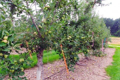 Penn State Cider Orchard Production Survey Findings