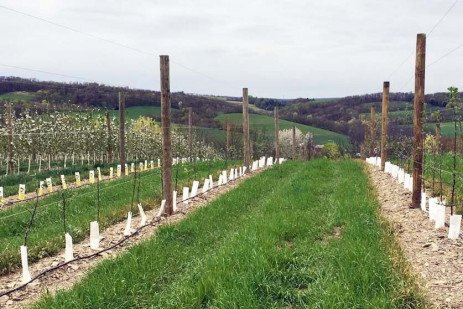 Models for the Future: Scholl Orchards