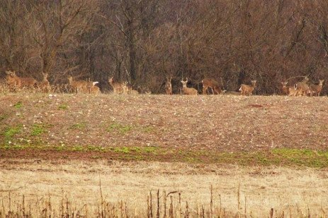 Deer Control Options for Farmers and Landowners