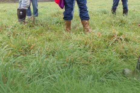 Tips for Fall Grazing Pastures
