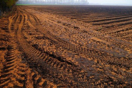 Soil compaction at grain harvest and while grazing