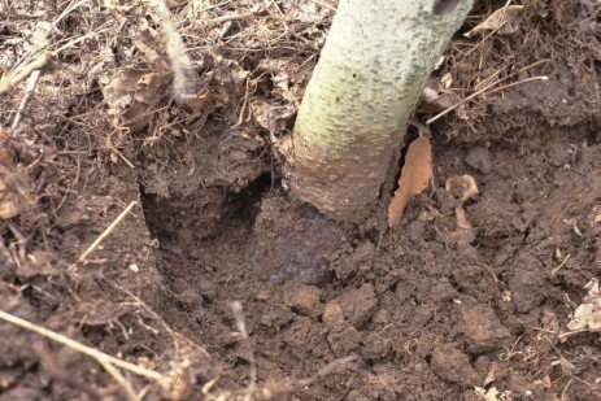 Orchard Wildlife Management: Preventing Vole Damage