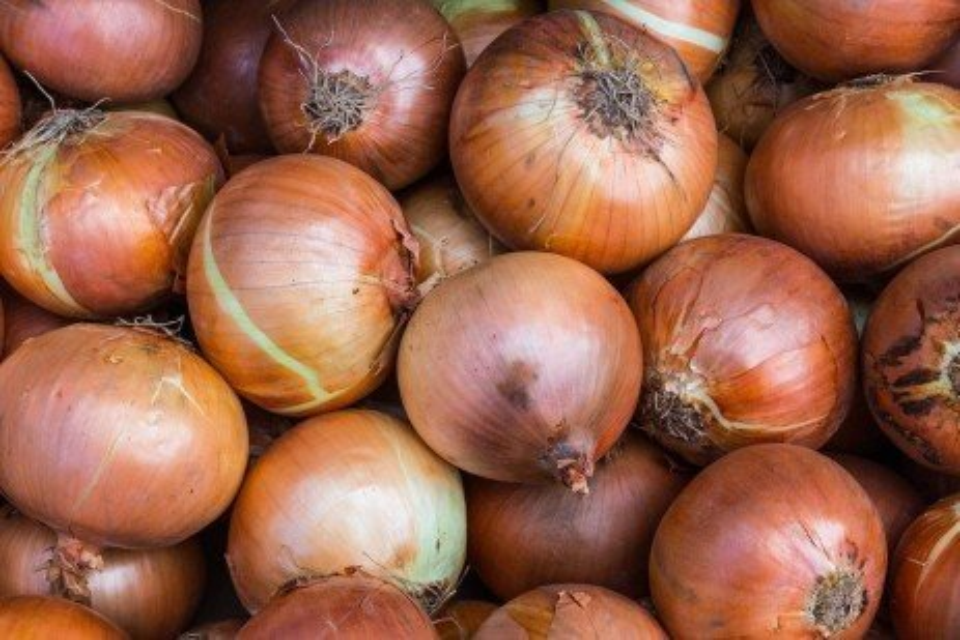 Onion Production