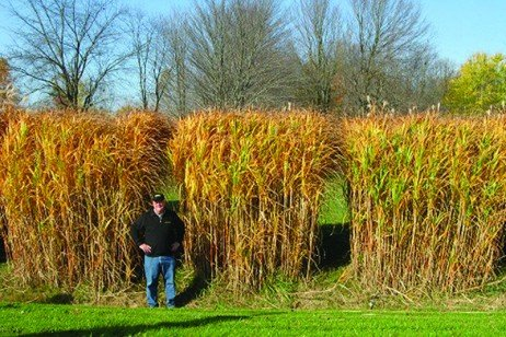 NEWBio Energy Crop Profile: Giant Miscanthus
