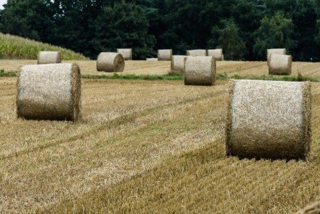 Designing Forage Production and Purchase Contracts