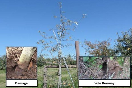 Orchard Wildlife Management - An Integrated Approach