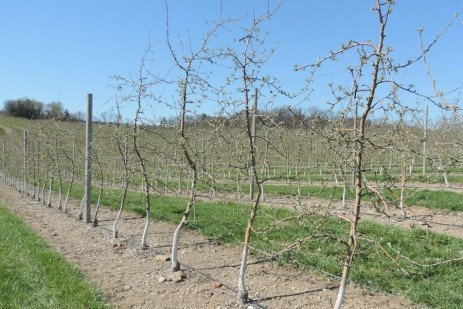 Orchard Production Systems: Selection Considerations