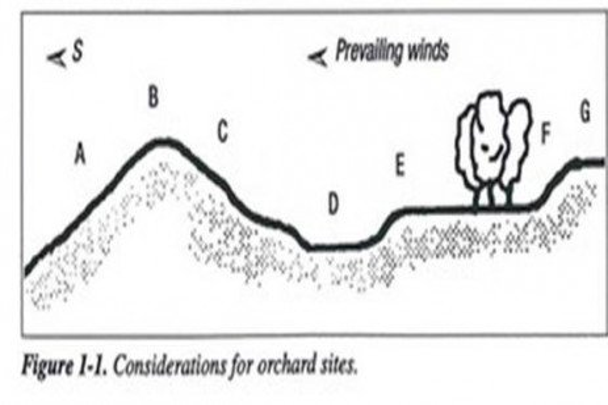 Establecimiento y Preparación de una Huerta
