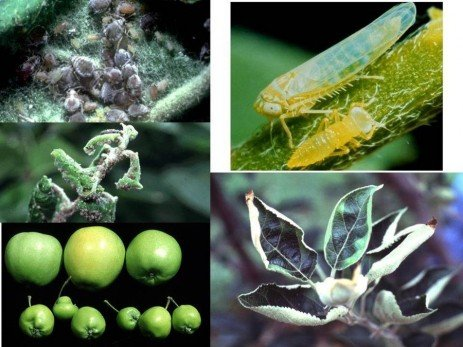 Orchard IPM - Integrating Neonicotinoid Insecticides