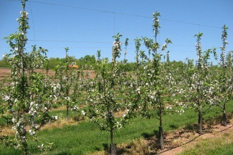 Orchard Establishment - Row Middle and Tree Row
