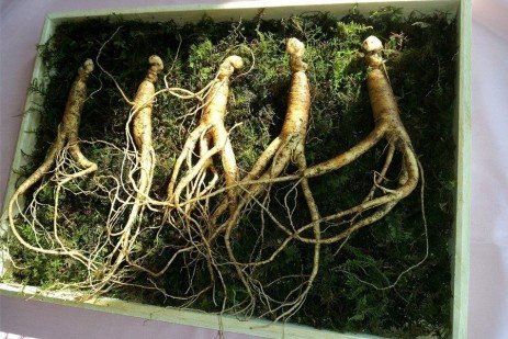 Forest Finance 5: Opportunities from Ginseng Husbandry in Pennsylvania