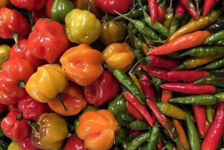 Container Grown Peppers