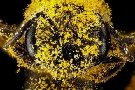 What Can We Do to Encourage Native Bees?