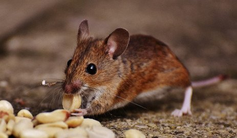 Pests Can Cause Asthma and Allergies