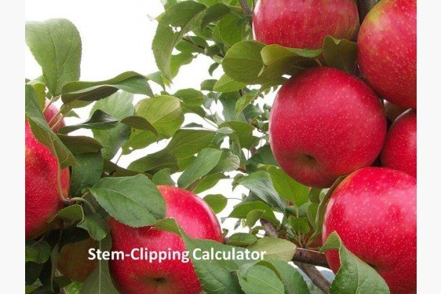 Honeycrisp Stem-Clipping Calculator