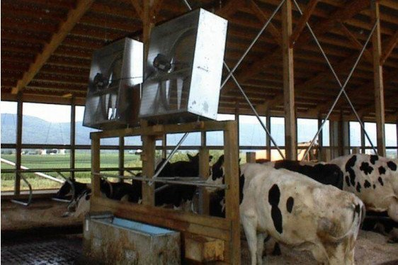 Heat Stress Abatement in Freestalls and Tie-Stalls
