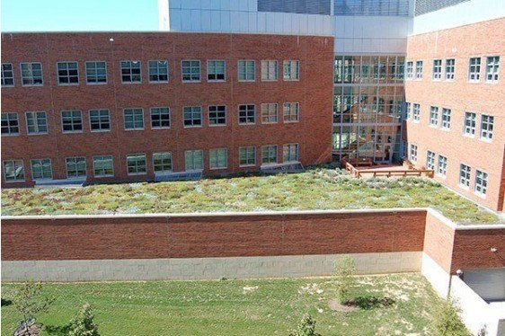 Green Roofs for Stormwater Management