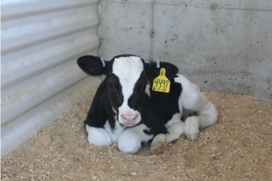 Generation Next: Calf Workshop - Newborn Calf Care