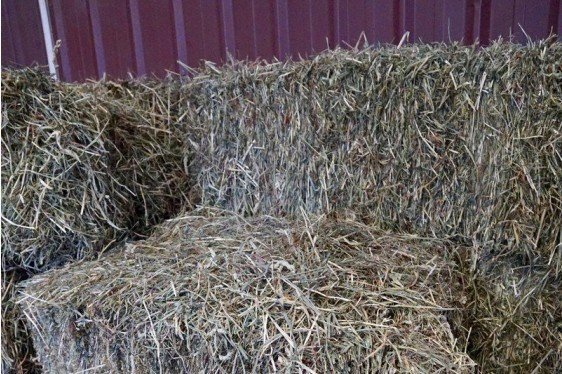 Risk of Botulism, Mold and Toxins in Feed