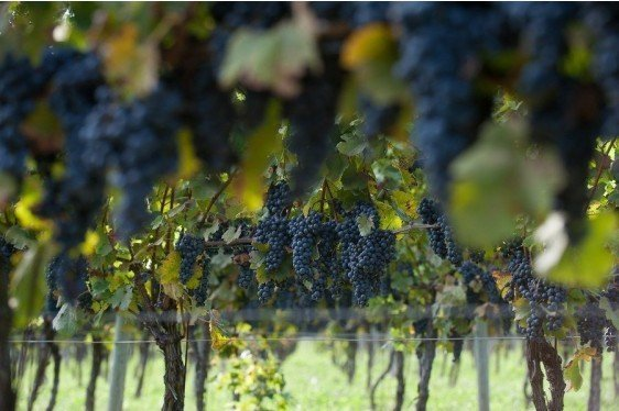 NCCC-212 Small Fruit & Viticulture Meeting