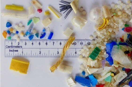 Hard to Digest – Impacts of Enduring Plastic Remnants