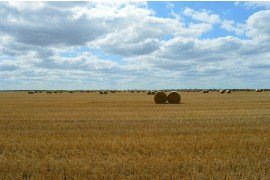 Weed Control in Small Grain Stubble and Burndown Considerations
