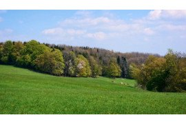 Preparing your Pastures for Spring