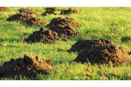 Damage from Moles