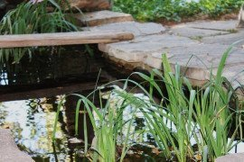 Water for Wildlife: Bird Baths and Backyard Ponds
