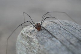 General Information about Spiders