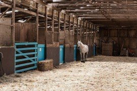 Horse Stable Flooring Materials and Drainage