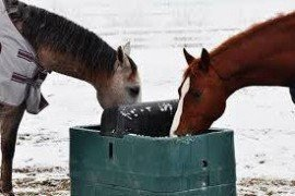 Horses May Be at Risk of Colic in Cold Weather