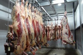Understanding Beef Carcass Yields and Losses During Processing