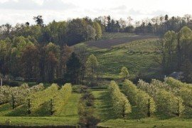 Apple Disease Control Toolbox - Fungicide and Antibiotic Efficacy