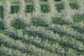 Stone Fruit Insect and Mite Control Toolbox - Insecticide/Miticide Efficacy