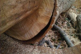 Calculating the Green Weight of Wood Species