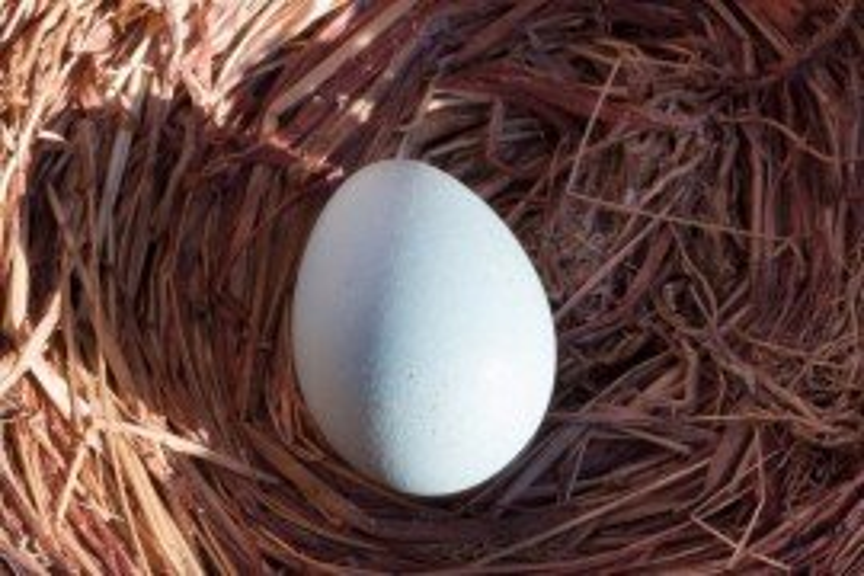 Modern Egg Industry