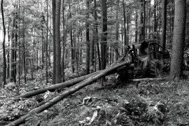 Forest Finance 8: To Cut or Not Cut- Deciding When to Harvest Timber