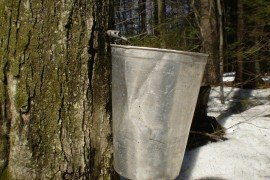 Maple Syrup Production for the Beginner
