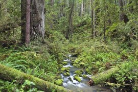 Forest Stewardship: Planning Your Forest's Future